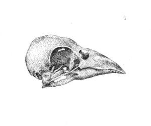 bird, drawing, and illustration image