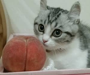 cat, Smack, and cute image