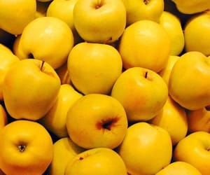yellow, apples, and fruit image