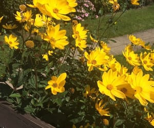 flowers, theme, and yellow image