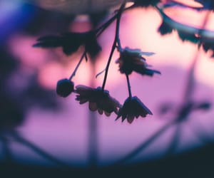 beauty, pink, and purple image