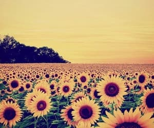 sun, aesthetic, and flowers image