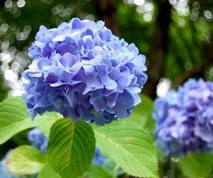 blossom, blue, and fleur image