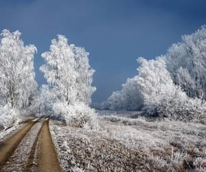 beautiful, snow, and frost image