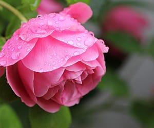 blossom, fleur, and flower image