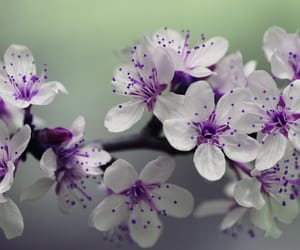 flowers, white, and blossom image