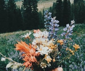 flowers, pure, and tumblr image
