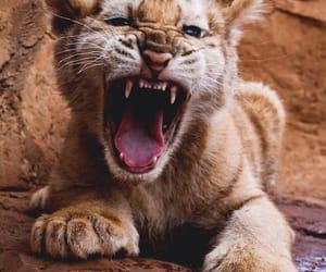 animals, cat, and lion image