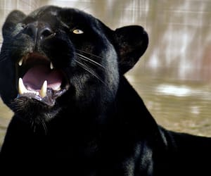 black, panther, and aesthetic image
