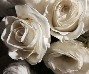 beautiful, white roses, and bouquet image