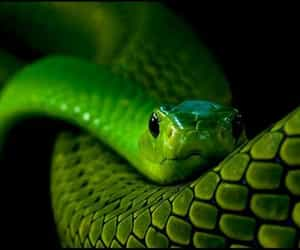 snake and green image