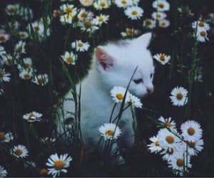 cat, daisy, and flowers image