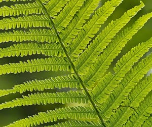 aesthetic, fern, and green image