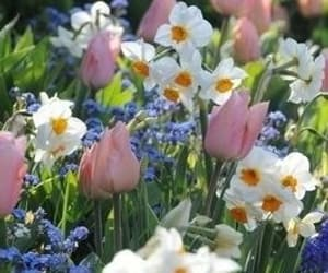 flowers, tulips, and daisies image
