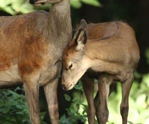 Animales, ciervos, and naturaleza image