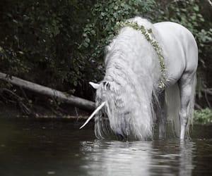 horse, unicorn, and phantasie image