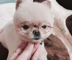 dog, furry, and glasses image