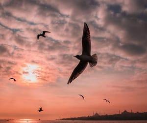 bird, istanbul, and sky image