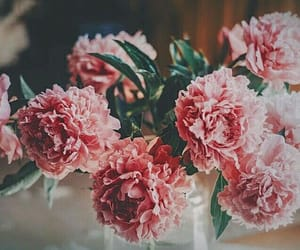bunch, pink, and dark image