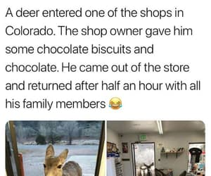 deer, funny, and lol image