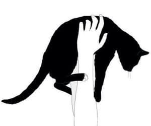 black, wallper, and cat image