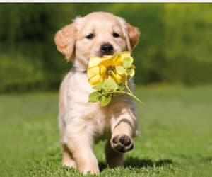 cute dogs, beautiful animals, and dog image