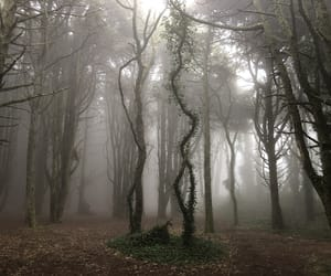 fog, sintra, and mistery image