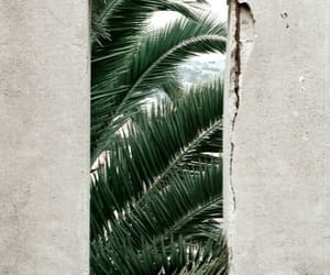 palms, green, and summer image