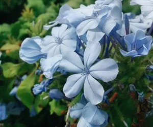 blue, flor, and flower image