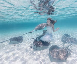 beach, diving, and summer image