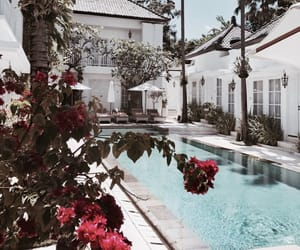 fancy, flowers, and pool image