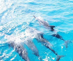 dolphin, summer, and water image