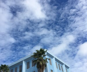 aesthetic, blue, and palm trees image