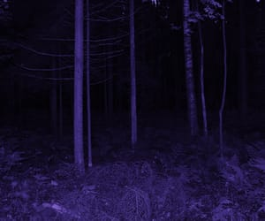 alternative, Darkness, and forest image