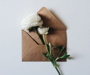 envelope, Letter, and flowers image