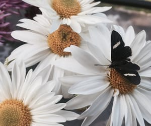 flores, flowers, and mariposas image