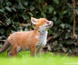 animals, fox, and foxes image