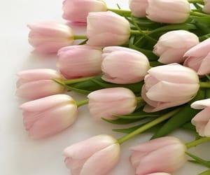 весна, тюльпаны, and Март image