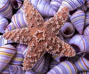 photo, purple, and starfish image