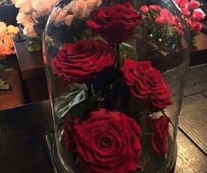 red, flowers, and lifestyle image