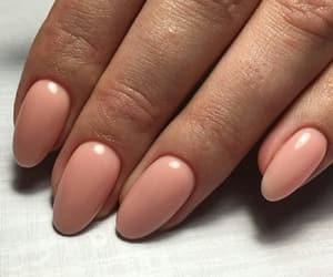 manicure, nails, and pink nail polish image