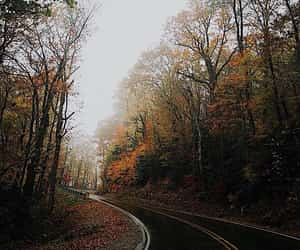 autumn, cloudy, and colors image
