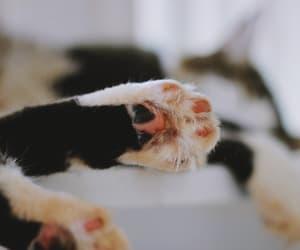 cat gato image