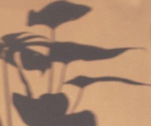 shadow, aesthetic, and beige image