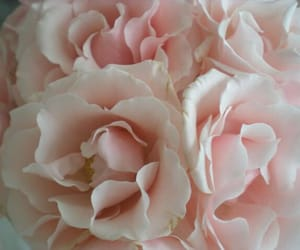 flower, gentle, and pink image