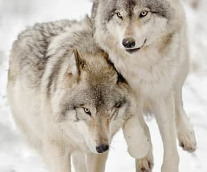 Wolves 💕