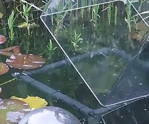 aquarium, tadpoles, and cool image