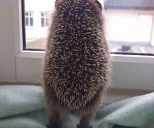 hedgehog, animal, and window image