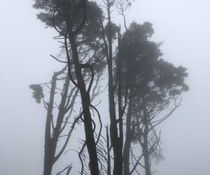 fog, sintra, and nature image