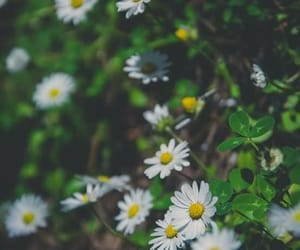 flowers, daisy, and green image